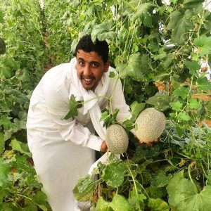 Bedouin man in white gelabaya holding on a fruit on Habiba Organic Farm